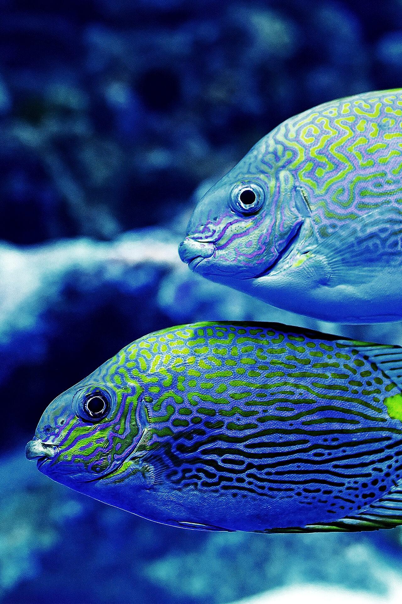 Tropische vissen in een aquarium