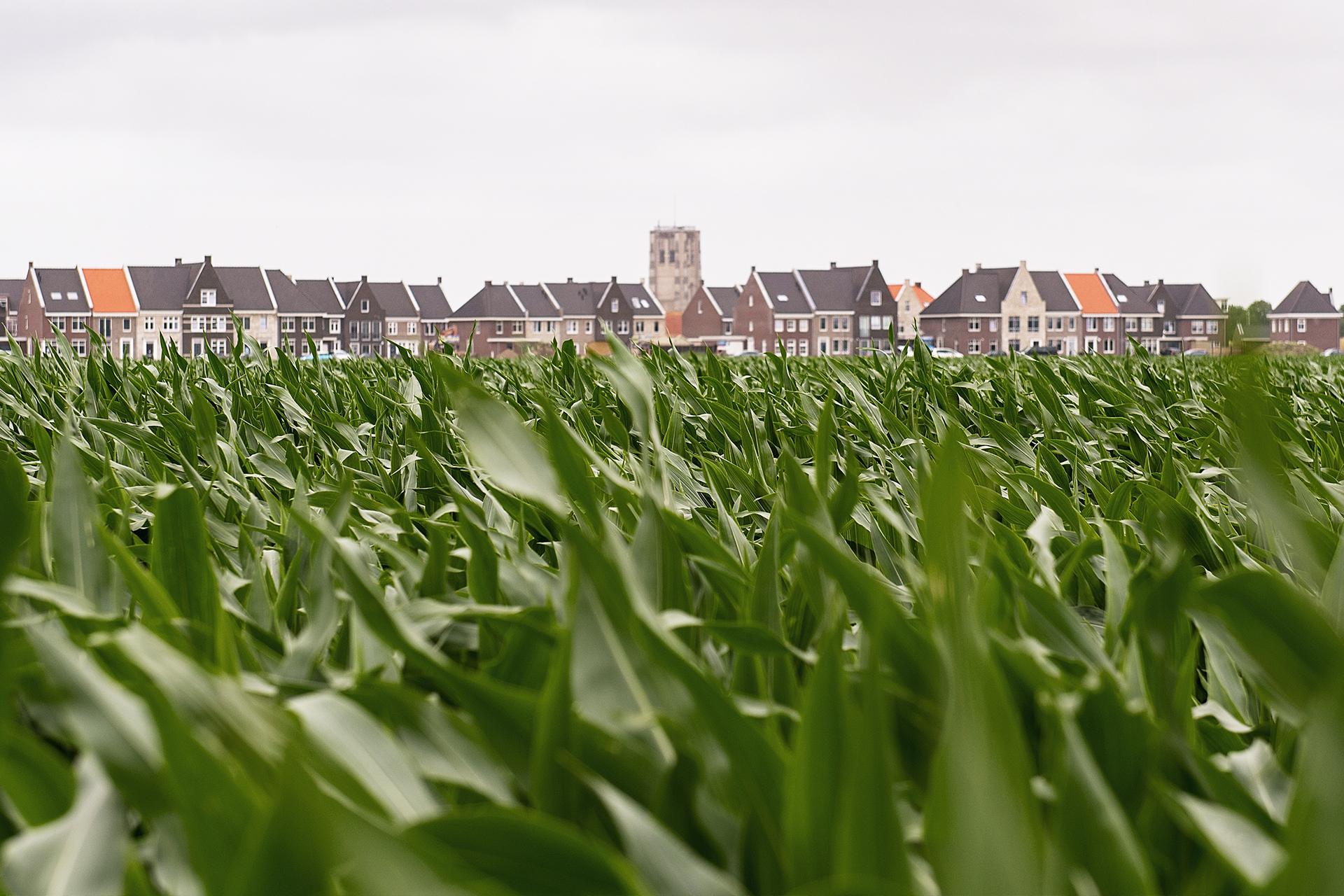 Nieuwe Oostdijk (Goedereede) - sfeer