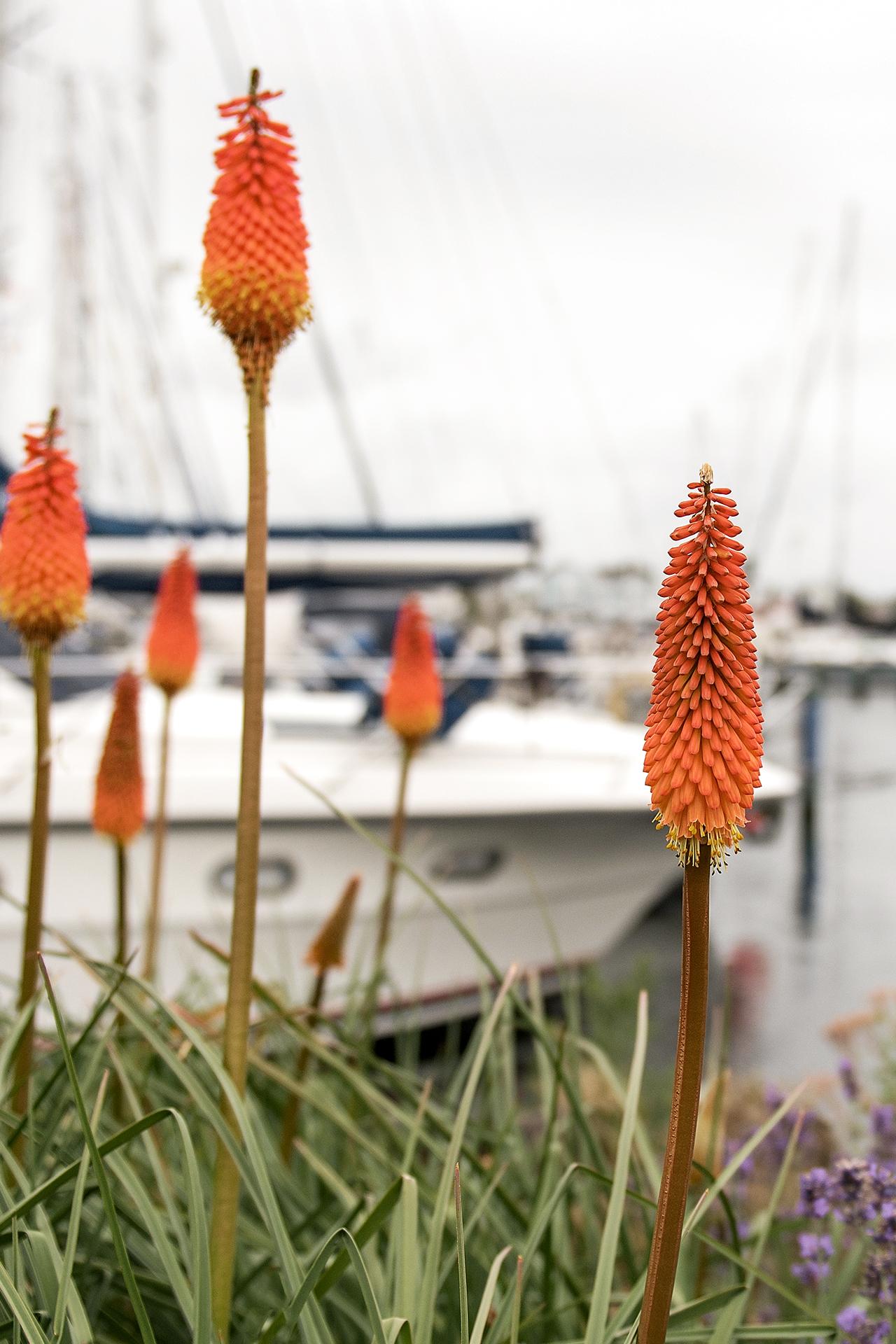 bloemen nabij de Cape Helius haven (Hellevoetsluis)