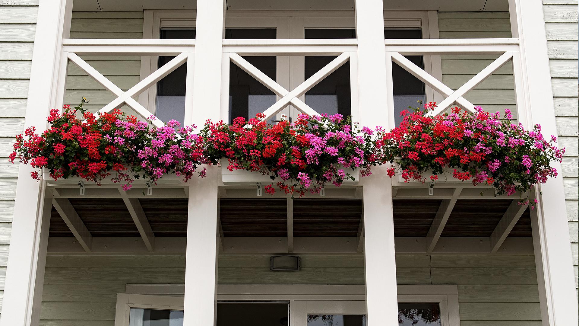 Cape Helius (Hellevoetsluis) - balkon met bloemen