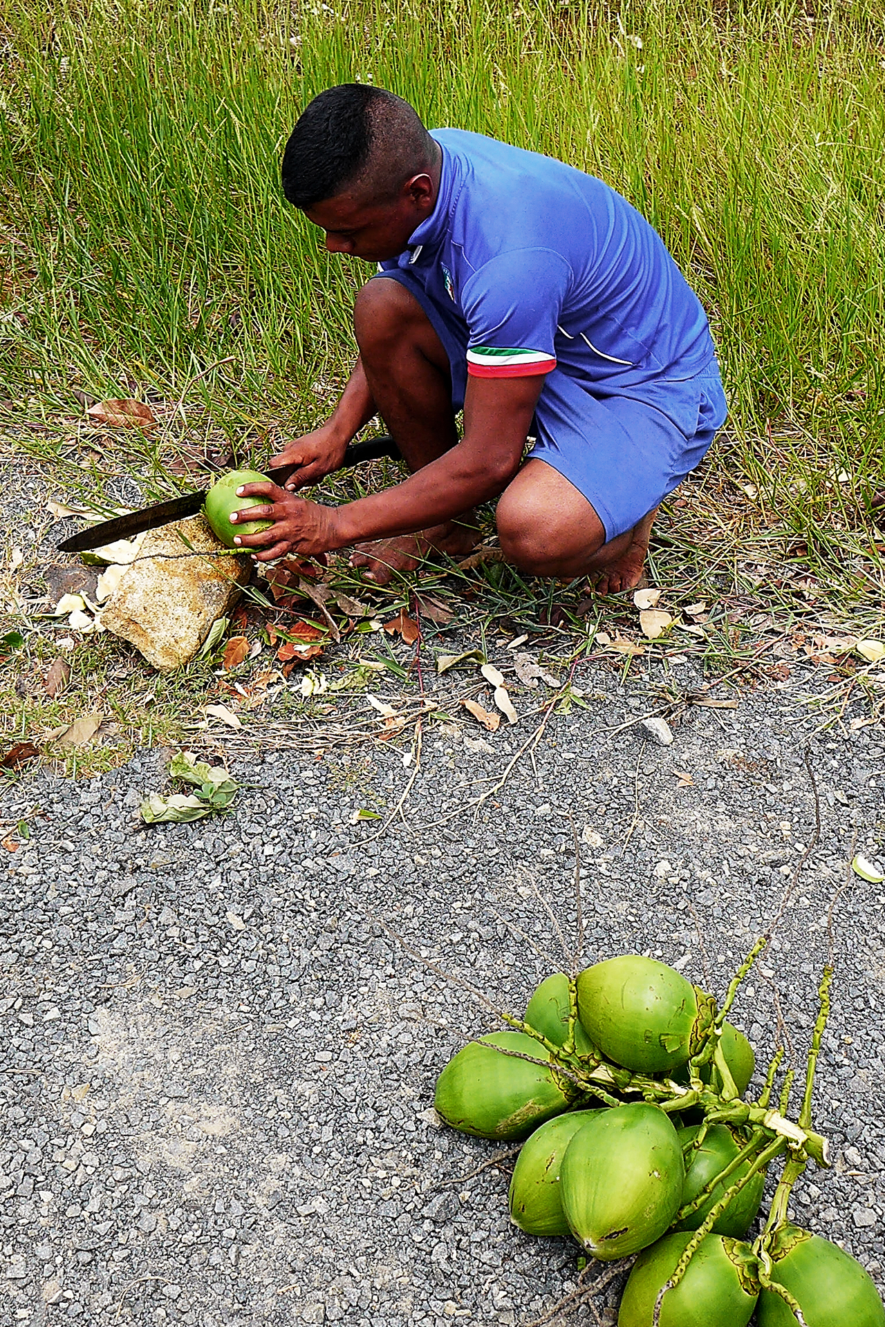 Panameese man opent kokosnoten