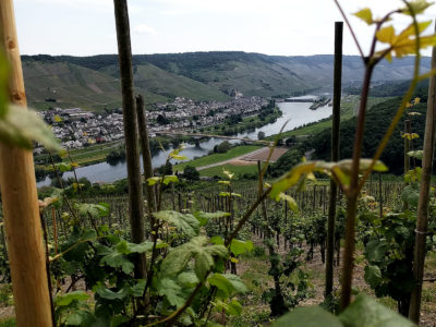 Trier-Koblenz (Duitsland) - wijngaarden aan de Moezel