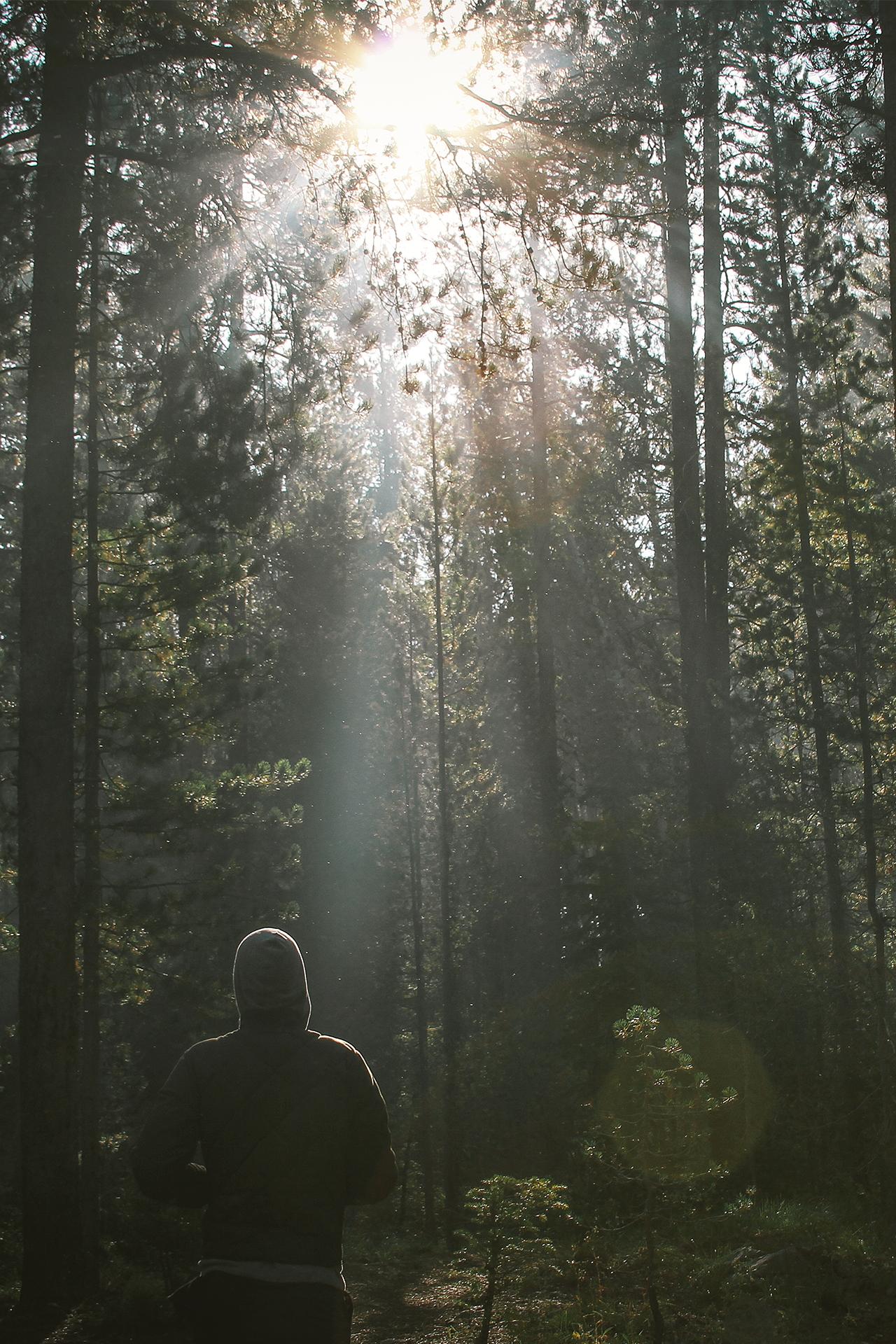 zonlicht door takken in het bos
