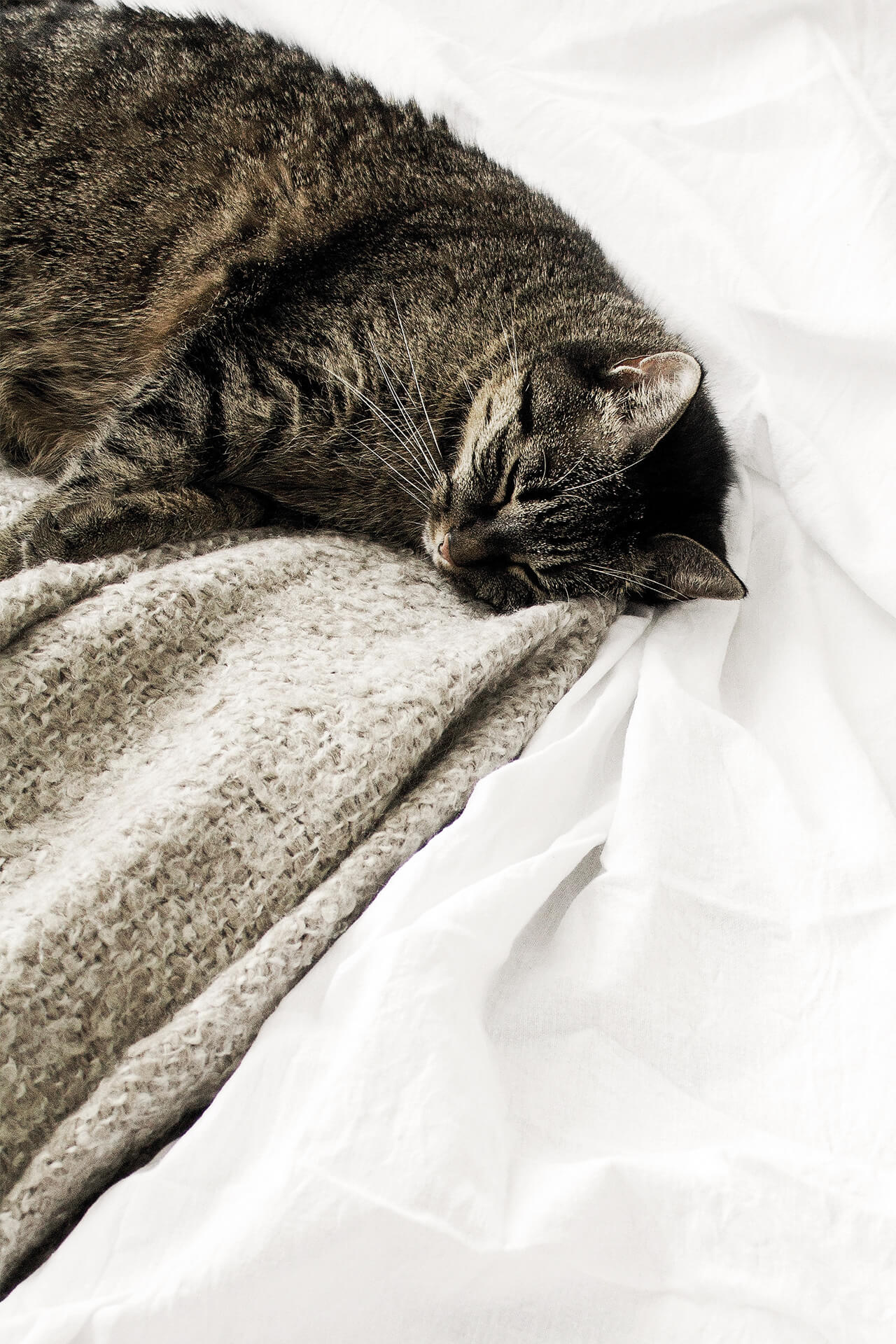 kat slapend op het bed